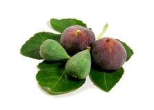 Rijpe fig. op vijgeblad Royalty-vrije Stock Afbeelding