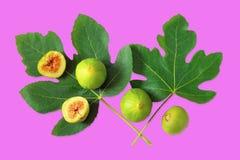 Rijpe fig.vruchten en groene bladeren van vijgeboom op roodachtig-purpere achtergrond Vlak leg stock afbeeldingen