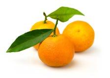 Rijpe geïsoleerde mandarijnen Royalty-vrije Stock Afbeelding