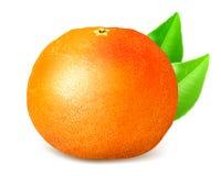 Rijpe gehele grapefruit met bladeren vector illustratie