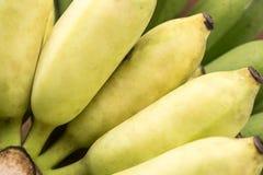 Rijpe gele gehele banaan royalty-vrije stock foto's