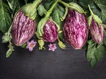 Rijpe gestreepte aubergines met bladeren en bloemen op donkere leilijst Royalty-vrije Stock Afbeeldingen