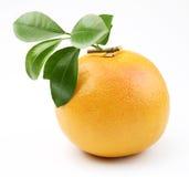 Rijpe grapefruit stock foto's