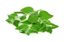 Rijpe groene (geïsoleerde) munt Stock Fotografie