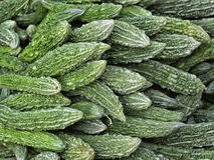 Rijpe groene komkommers Royalty-vrije Stock Fotografie