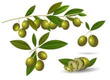 Rijpe groene olijven Royalty-vrije Stock Afbeelding