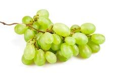 Rijpe groene wijnstok Stock Fotografie