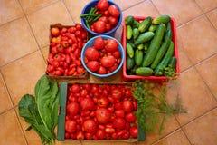 Rijpe grote tomaten en komkommers Stock Afbeelding