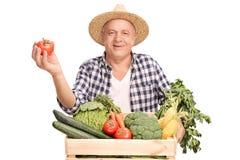 Rijpe landbouwer die één enkele tomaat houden Royalty-vrije Stock Afbeeldingen