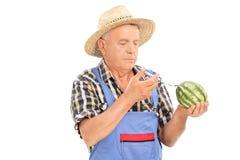 Rijpe landbouwer die chemische producten inspuiten in watermeloen Stock Foto