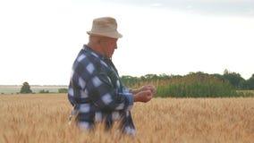 Rijpe landbouwer die met tevredenheid bij zijn gecultiveerd gebied kijken en zorg van tarwe na een werkdag hebben Rijpe mens stock video