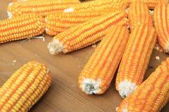 Rijpe maïskolven Stock Afbeelding