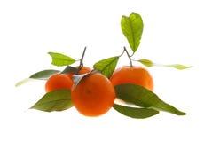 Rijpe mandarijn stock afbeelding