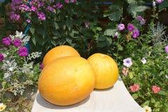 Rijpe Meloen Stock Afbeelding