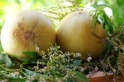 Rijpe meloenen op lijst royalty-vrije stock afbeeldingen