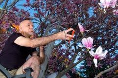 Rijpe mens het snoeien boom stock fotografie