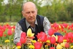 Rijpe mens onder tot bloei komende tulpen royalty-vrije stock afbeelding