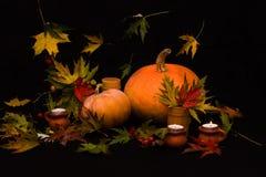 Rijpe oranje pompoenen onder kleurrijke bladeren Stock Foto's