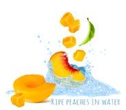 Rijpe perziken in waterplons Stock Foto's