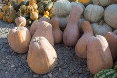 Rijpe pompoenen bij landbouwersmarkt in Georgië De herfst geplukte pompoenen Royalty-vrije Stock Fotografie