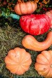 Rijpe pompoenen voor Halloween Royalty-vrije Stock Afbeeldingen