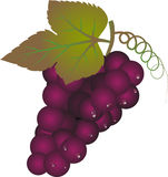 Rijpe purpere druif met geïsoleerde bladeren Royalty-vrije Stock Afbeeldingen