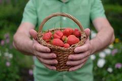 Rijpe rode aardbei op groen gras Royalty-vrije Stock Foto