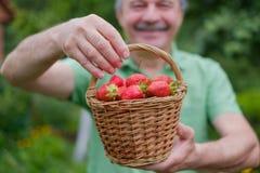 Rijpe rode aardbei op groen gras Royalty-vrije Stock Afbeeldingen