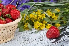 Rijpe rode aardbeien Royalty-vrije Stock Afbeeldingen