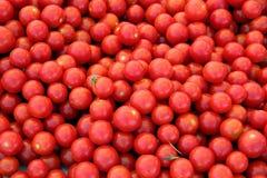 Rijpe rode kersentomaten Stock Afbeeldingen