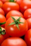 Rijpe rode tomaten Stock Afbeeldingen