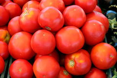 Rijpe rode tomaten Royalty-vrije Stock Afbeeldingen