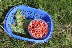 Rijpe rode wilde aardbei in een mand op een gras Stock Foto