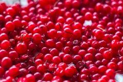 Rijpe sappige rode aalbesbessen Horizontale foto royalty-vrije stock foto