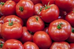 Rijpe smakelijke rode tomaten De organische tomaten van de dorpsmarkt Verse tomaten Kwalitatieve achtergrond van tomaten Stock Afbeelding