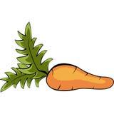 Rijpe smakelijke wortel met bladeren Stock Afbeeldingen