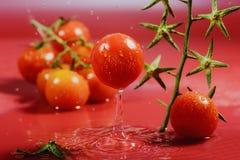 Rijpe tomaat Royalty-vrije Stock Foto