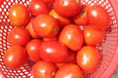 Rijpe tomaten in mand Royalty-vrije Stock Fotografie