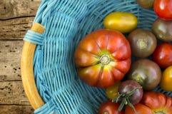 Rijpe tomaten van verschillende verscheidenheden in blauwe mand Royalty-vrije Stock Afbeeldingen