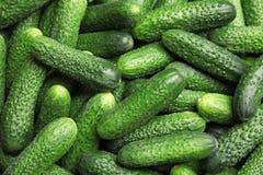 Rijpe verse komkommers Royalty-vrije Stock Fotografie