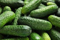 Rijpe verse komkommers Stock Afbeelding