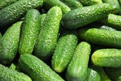 Rijpe verse komkommers Royalty-vrije Stock Foto's