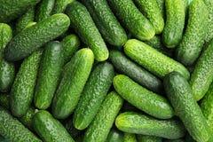 Rijpe verse komkommers Royalty-vrije Stock Afbeeldingen
