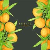 Rijpe verse sinaasappelen Royalty-vrije Stock Foto's