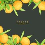 Rijpe verse sinaasappelen Stock Fotografie