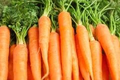 Rijpe verse wortelen als achtergrond stock foto