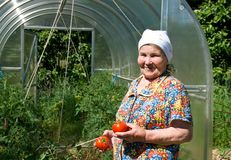 Rijpe vrouw met rijpe tomaten Royalty-vrije Stock Foto