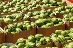 Rijpe watermeloenen die in kartondozen voor levering aan de opslag worden ingepakt royalty-vrije stock fotografie