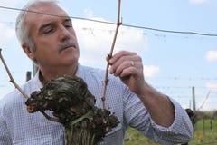 Rijpe wijn-producent Royalty-vrije Stock Fotografie