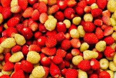 Rijpe wilde aardbeiachtergrond Royalty-vrije Stock Fotografie